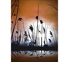 Tall wild grass.... Photographic Print