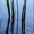 Reeds by Nancy Barrett