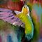 The Most Colourful Birds