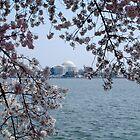 Jefferson Memorial at Cherry Blossom Time by LittleBird