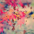 Shades of Autumn by Chris Armytage™