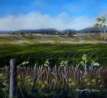 Crops in the landscape.   Toowoomba Australia by Sandra  Sengstock-Miller