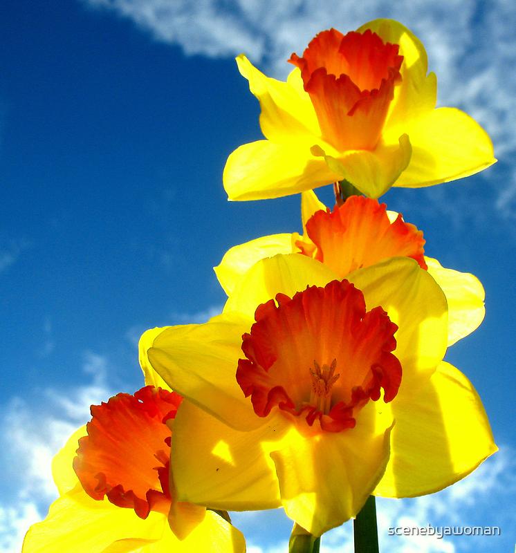 Daffodills in the Sky by scenebyawoman
