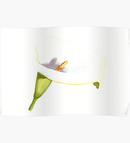 Single White Lilly Poster