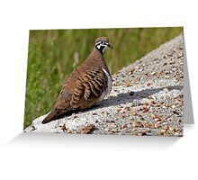 Squatter Pigeon Greeting Card