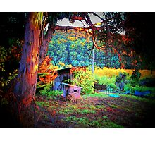 Home, Sweet Home in the Doghouse Photographic Print