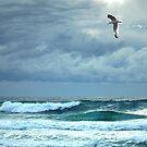 silver sea by carol brandt
