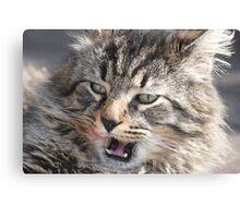 Stray cat. . .  Canvas Print