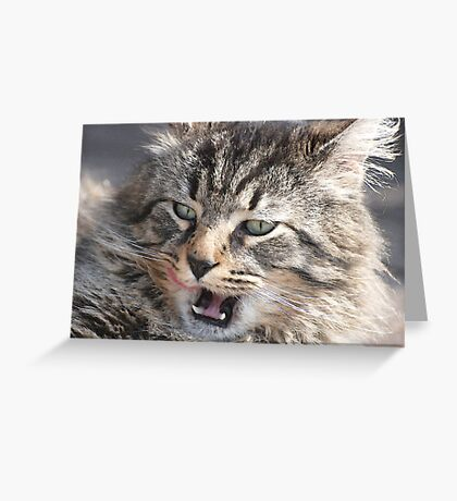 Stray cat. . .  Greeting Card