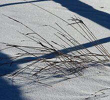 Fall's Flavor on Winter by Carole Brunet