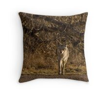 Canis latrans Throw Pillow
