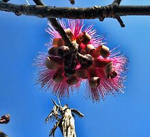 Shaving Brush Tree 2 by GolemAura
