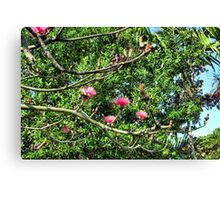 Shaving Brush Tree 6 Canvas Print