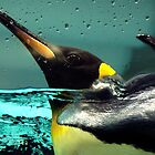 Come back Pingu! by Leila  Koren