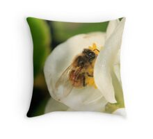 Bee on white Begonia Throw Pillow