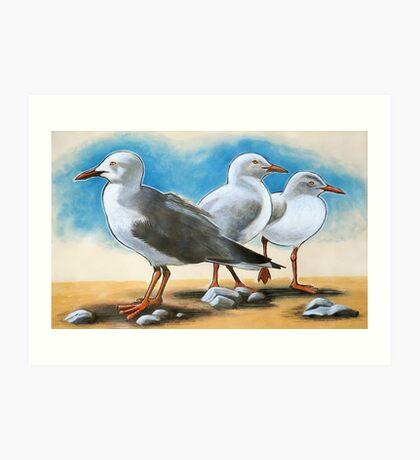 Silver Gulls 1 Art Print
