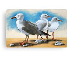 Silver Gulls 1 Canvas Print