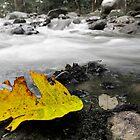 Fallen Leaf by BengLim