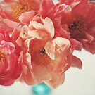 Paeonia #5 by ALICIABOCK
