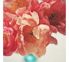 Paeonia #5 Photographic Print