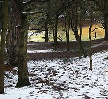 Oxshott Woods in the Snow by jenny meehan