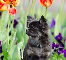 Dog and flowers by franceslewis