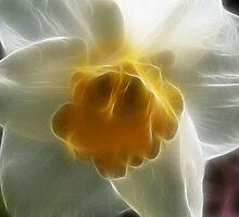 Spring Daffodil by Rosemariesw