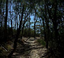 Porter's Scrub Loop Trail by Ben Loveday