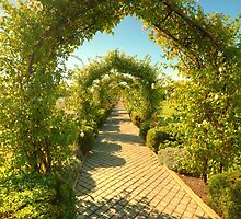 The Rose Arbour by Elaine Teague