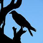Crow by Lynda Kerr