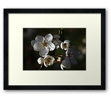 A New Season Coming into Bloom Framed Print