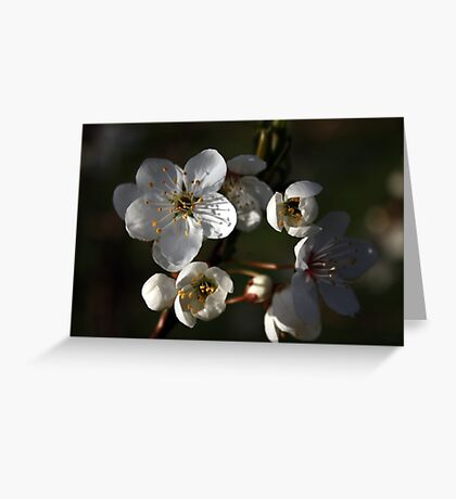 A New Season Coming into Bloom Greeting Card