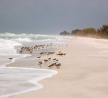 Sandpipers on Beach by Jeff Ore