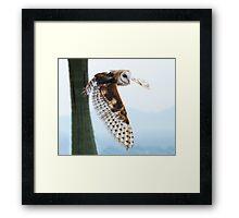Barn Owl Rising Framed Print
