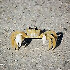 Little Crab by Jeff Ore