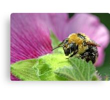 Hollyhock Harvester Canvas Print