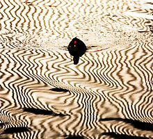 Moorhen and Corrugation by Paul Davey