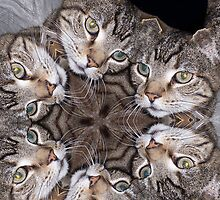 The Many Faces Of A Cat by biglnet