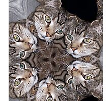 The Many Faces Of A Cat Photographic Print