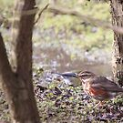 Redwing In The Undergrowth by Richard Durrant