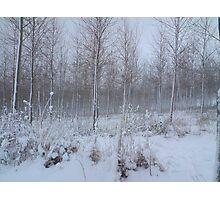 Plantation in snow Photographic Print