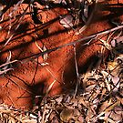 red earth, outback, australia  by christopher  bailey