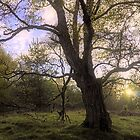 Characterful Tree by Tim Haynes