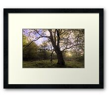 Characterful Tree Framed Print