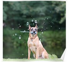 Dog and Bubbles Poster