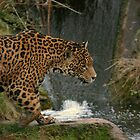 Leopard and Waterfall by Franco De Luca Calce