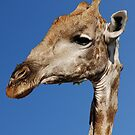 Sticking My Neck Out - Moremi Game Reserve, Botswana by Adrian Paul