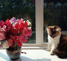 sweet pea kitten by CatharineAmato