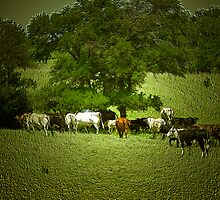 Cattle Drive ? by becky-lou