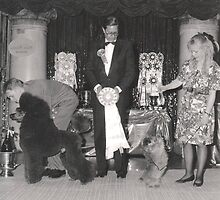 Vintage Dog Show Photograph featuring Poodle and Terrier by Tails of the Past